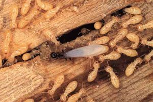 Who is responsible for pest and termite control – landlords or tenants in York PA?