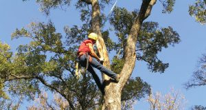 What are the benefits of tree trimming services in Lancaster PA
